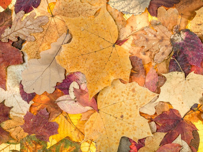 autumn background from various fallen leaves