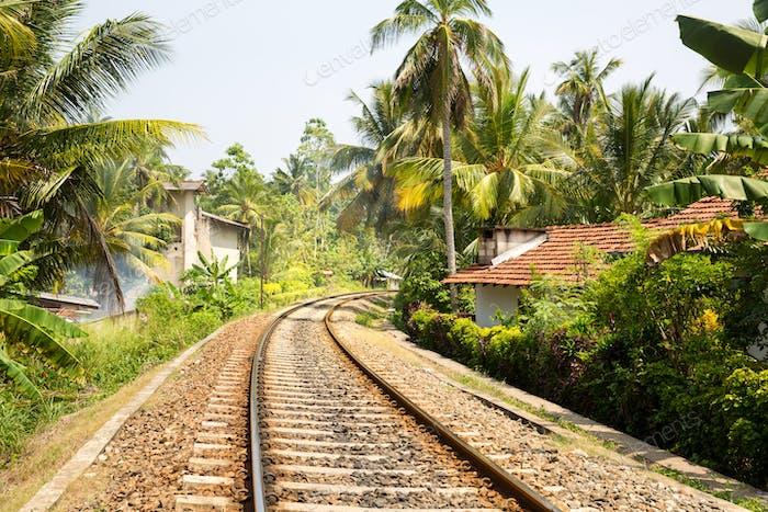Palm forest across railway road on Sri Lanka