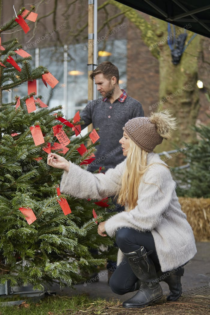 A woman choosing a traditional pine tree, Christmas tree