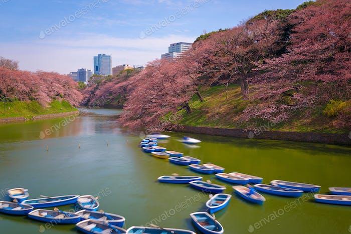 Tokyo, Japan at Chidorigafuchi Imperial Palace moat