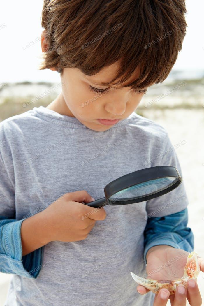 Young boy examining seashell