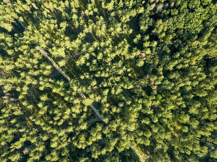 Top view of green trees on a sunny day. Deciduous forest as a background for the layout. Aerial view