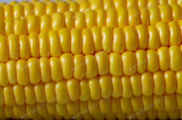Ripe fresh organic sweet corncob closeup background