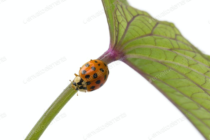 Ladybug on a stem of a plant