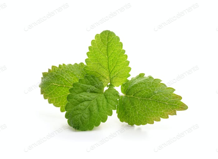 Fresh balm mint leaves