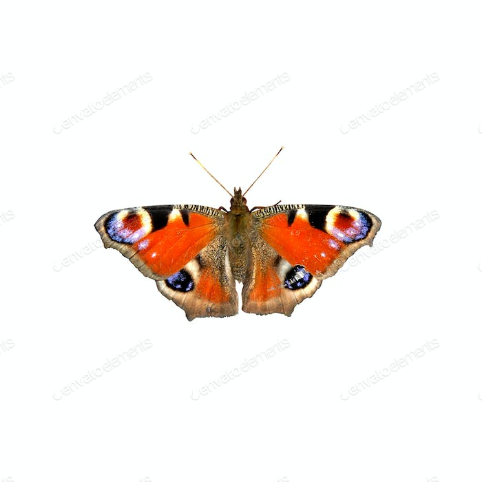 butterfly isolated on white