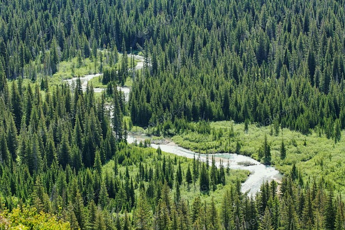 River and forest in Glacier national park
