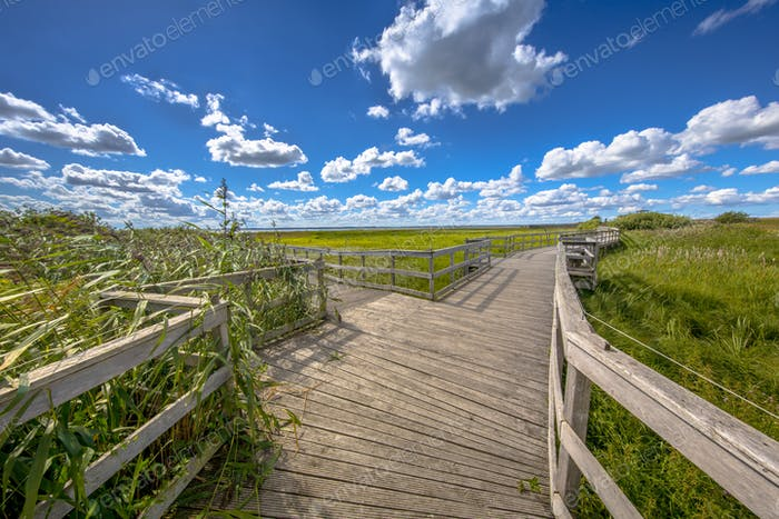Wooden boardwalk with seats through reed marshland