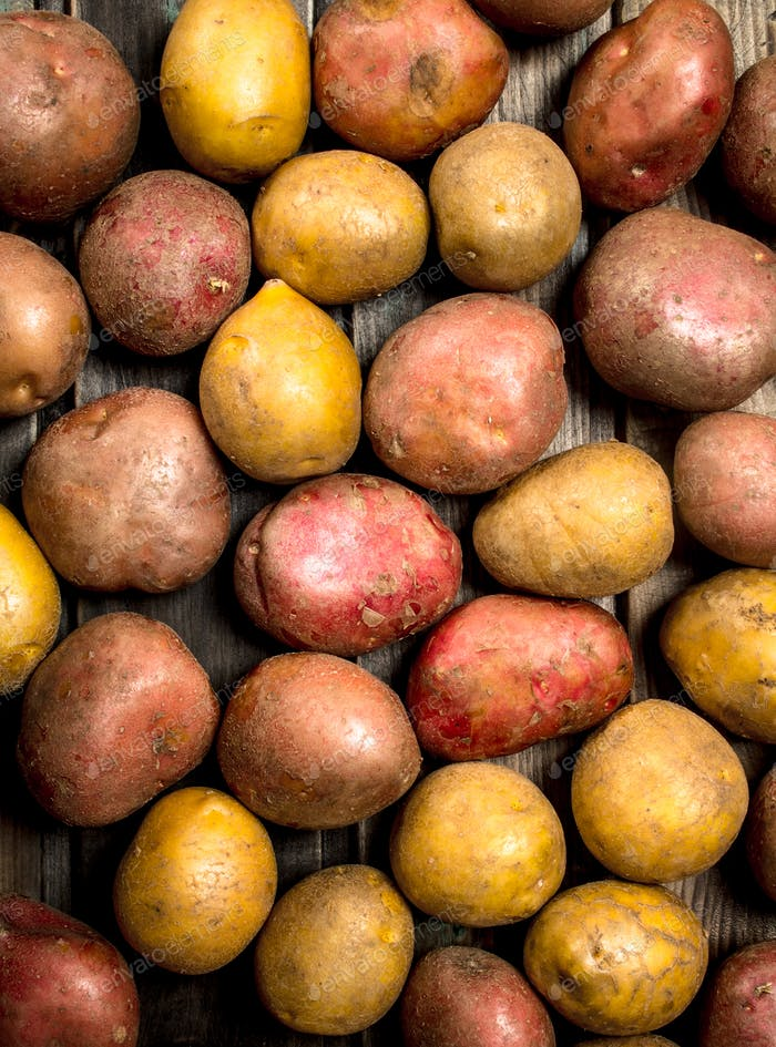 Fresh ripe potatoes.