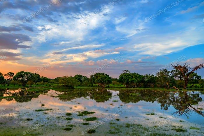 Sunset in African marshland