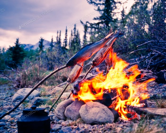 Tasty grayling fish over taiga wilderness campfire