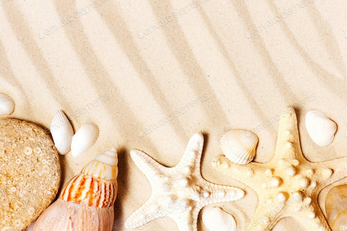Background with Seashells on the Sand