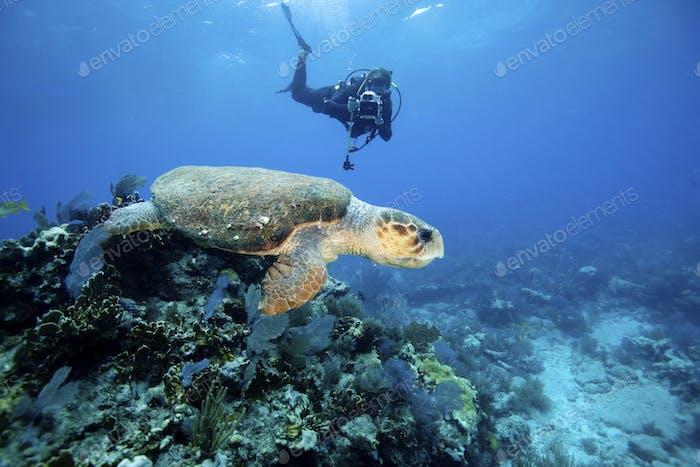 Scuba diver videotapes Loggerhead turtle during dive