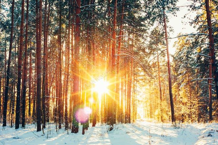 Belle Sunrise Sunshine Sunshine En Hiver Sunny Neige Conifère