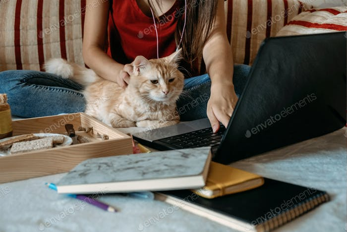 Home office, work space, work from home concept. Young woman with laptop and cat working at sofa