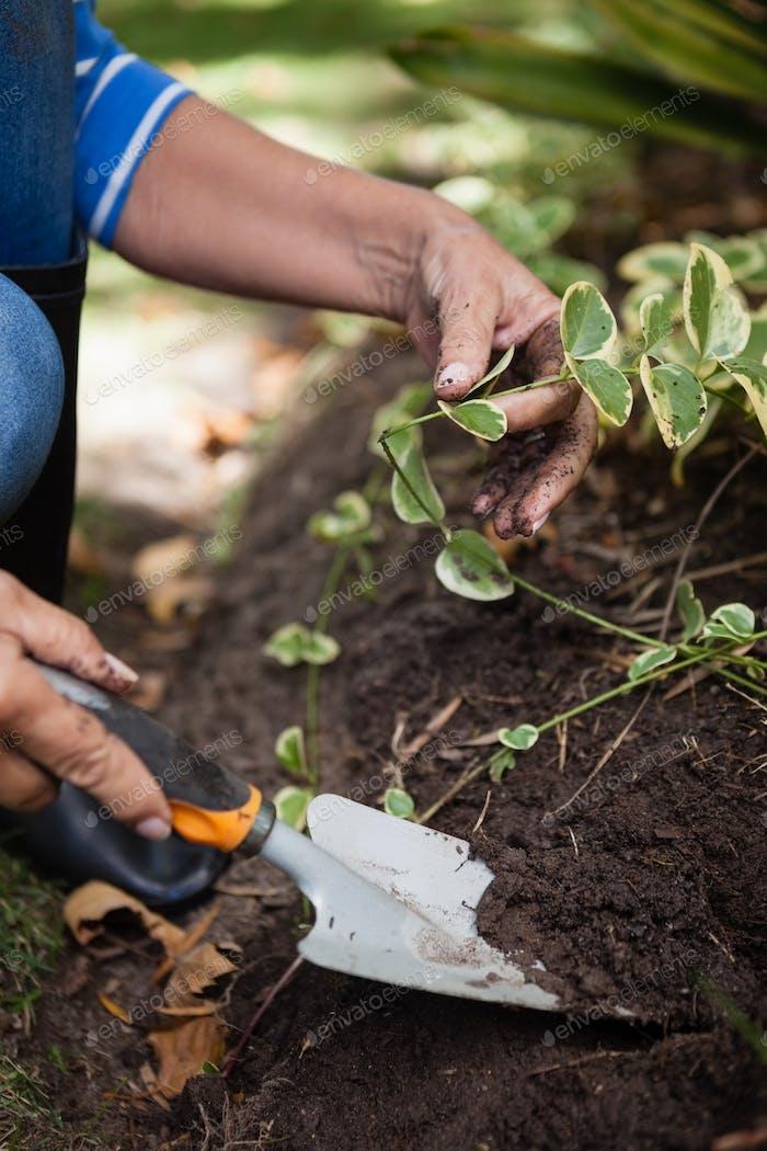 Niedriger Abschnitt der älteren Frau graben Boden mit Kelle