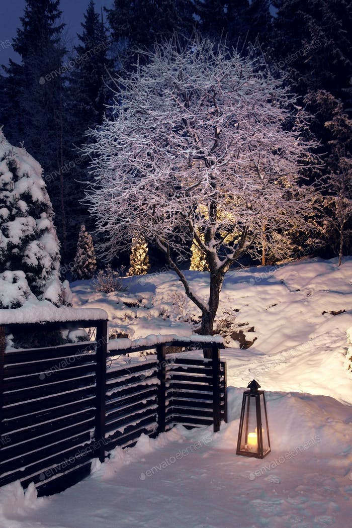 Winter evening in snowy garden
