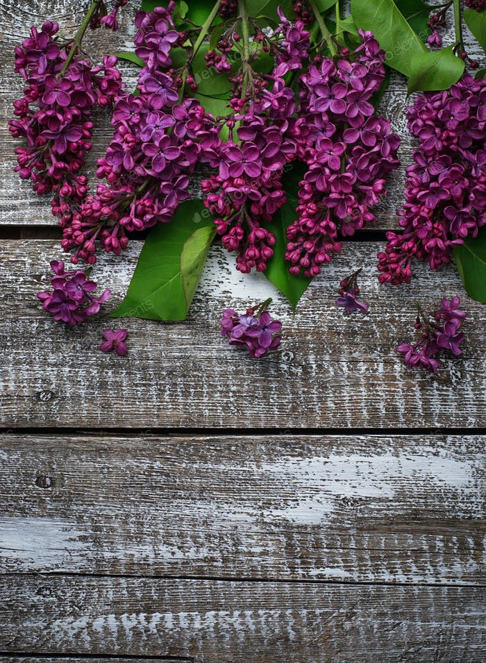 Flower lilac on a wooden background