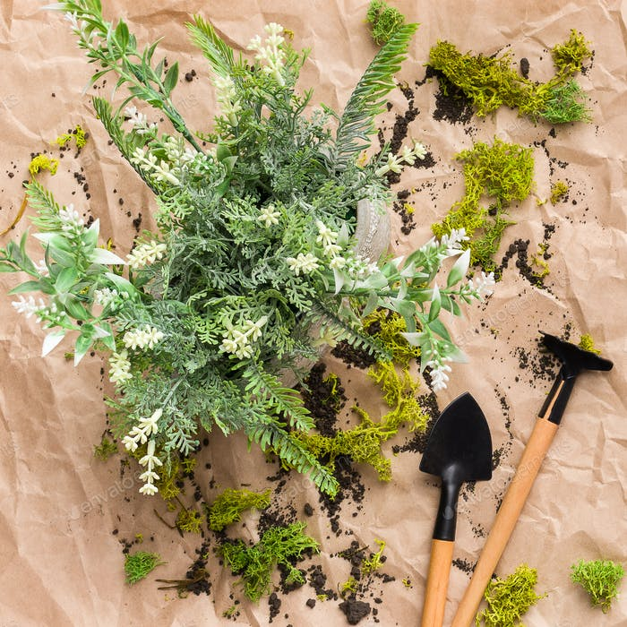 Plant and mini gardening tools, top view