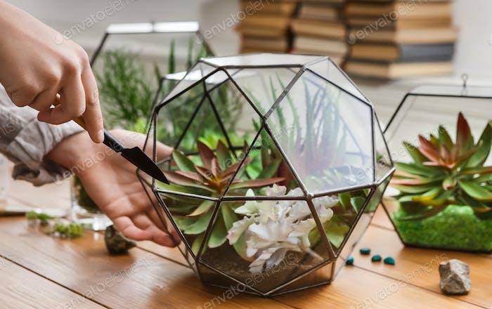 Woman planting succulents in geometric florarium, closeup