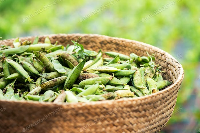 Close up view of legume peas in basket