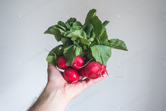 Red radish in hand with white background