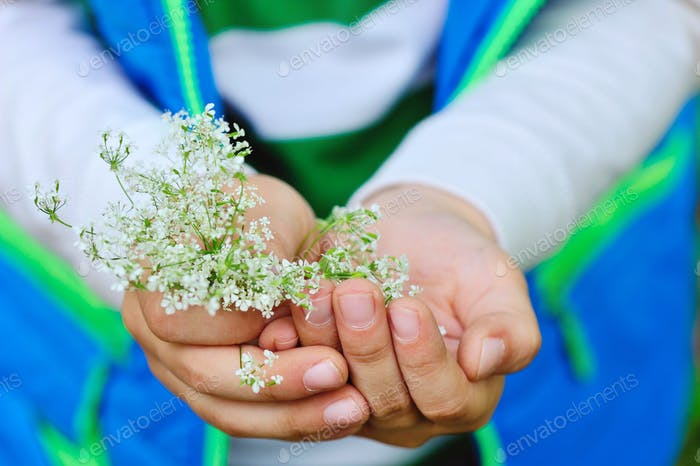 Small white flowers in children's hands