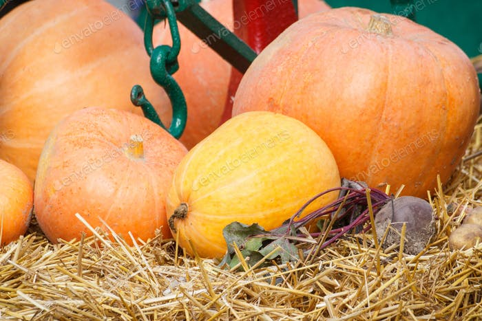 Harvesting decorations made of pumpkin, vegetables and hay