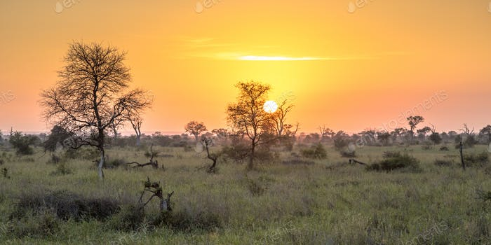 Sunrise over savanna
