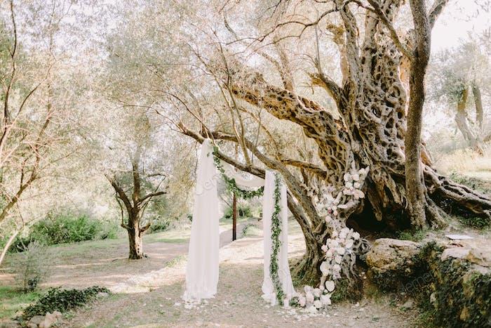 elegante Hochzeit Bogen in Olivenbäumen Park