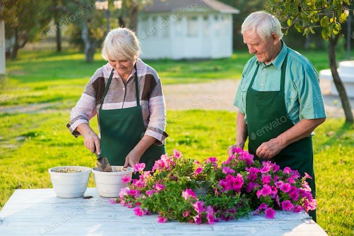 Elderly gardeners working with flowers