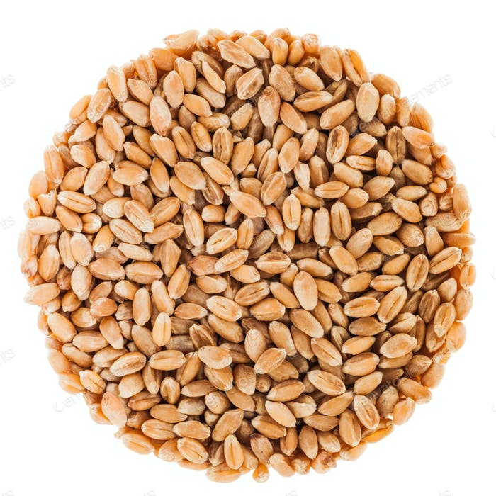 Circle of Black Tea Isolated on White Background wheat seeds Iso