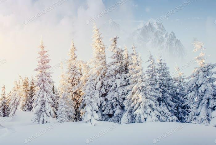Fantastic winter landscape. On the eve of the holiday. The dramatic scene. Carpathian, Ukraine