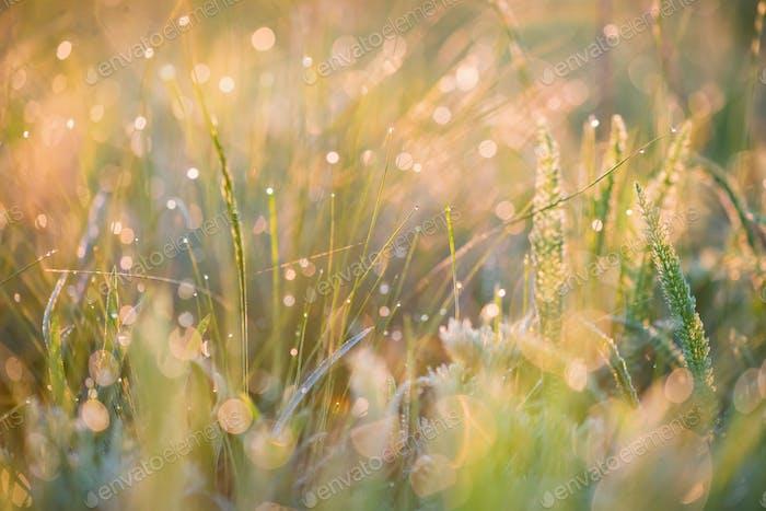 Schöner Hintergrund mit Morgentau auf Gras in der Nähe