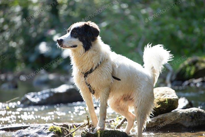Glücklicher Hund im Wasser.