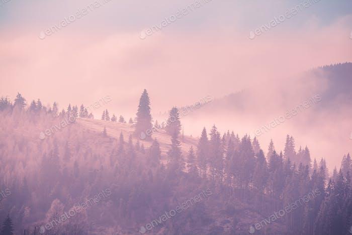 Nebel Herbst Landschaft