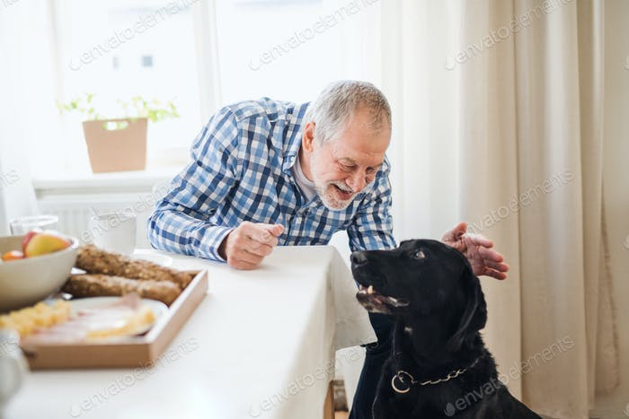 A senior man with a pet dog sitting at the table at home, having breakfast.