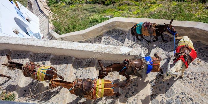 Insel Santorini, Griechenland - Esel im Dorf Fira