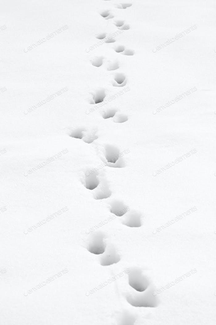 Footprints trough the snow