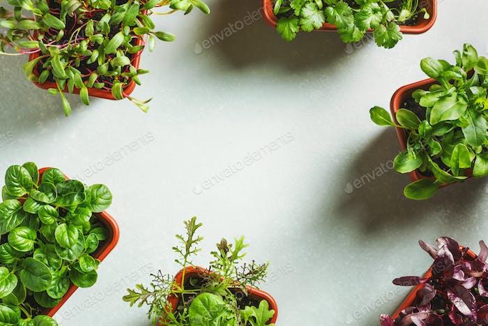 Home grown organic micro greens