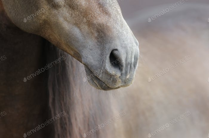 Close up of nose of horse in soft pastel colors.