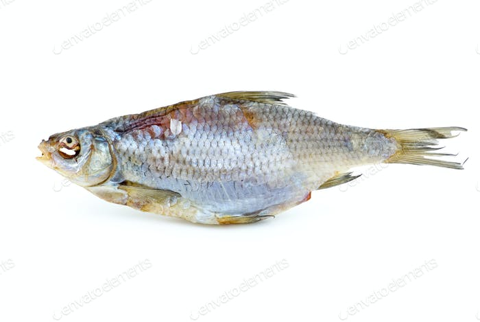 Dried sea roach fish