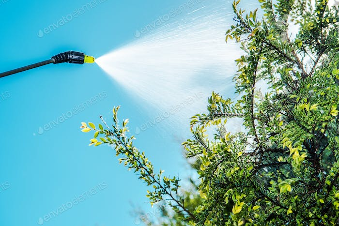 Spraying Insecticide on Tree