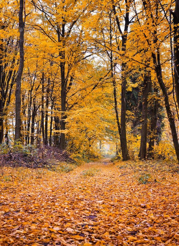 Weg durch den Herbstwald