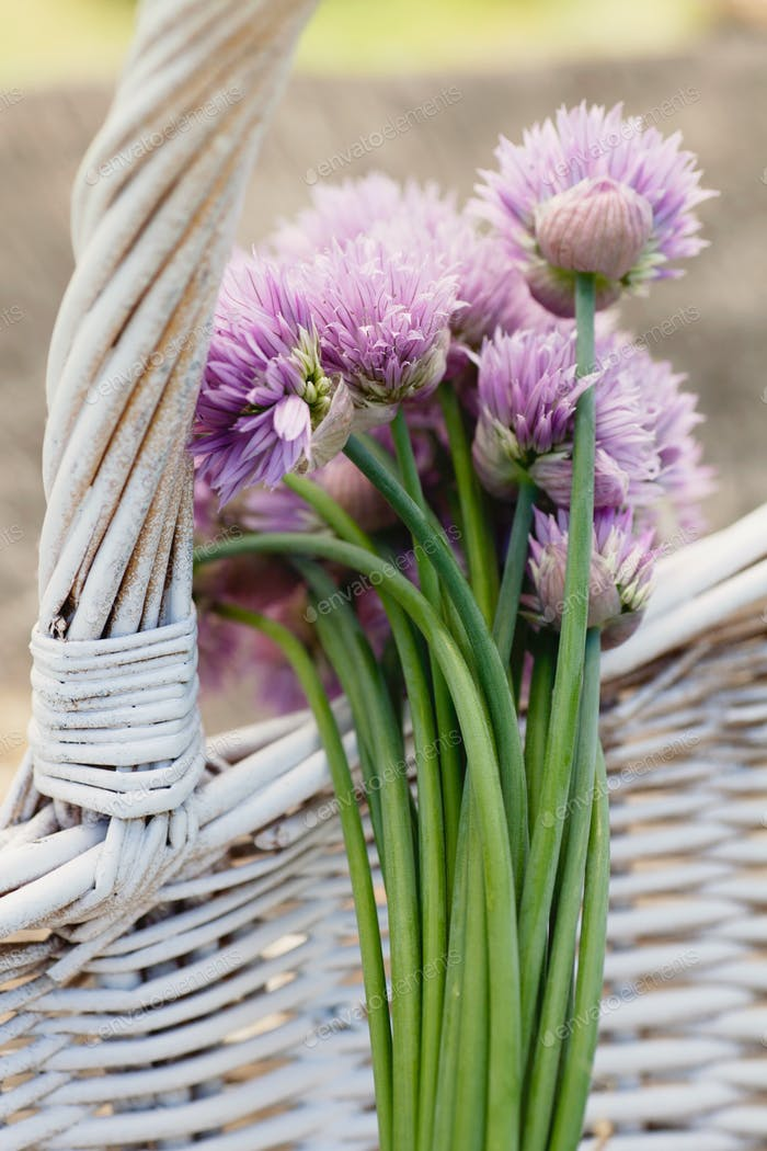 Chives in basket