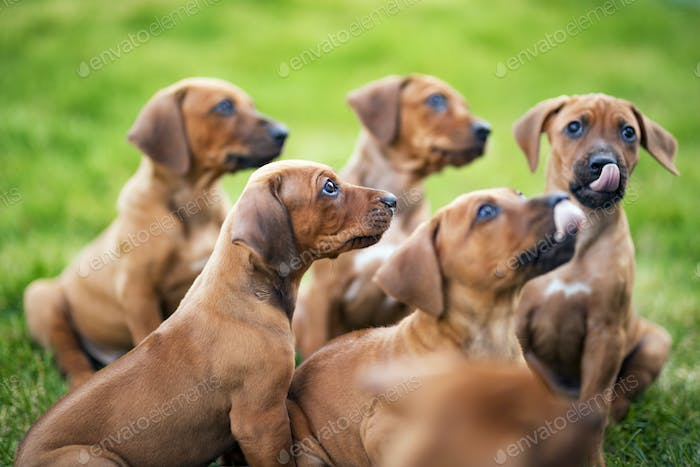 Puppies waiting for food