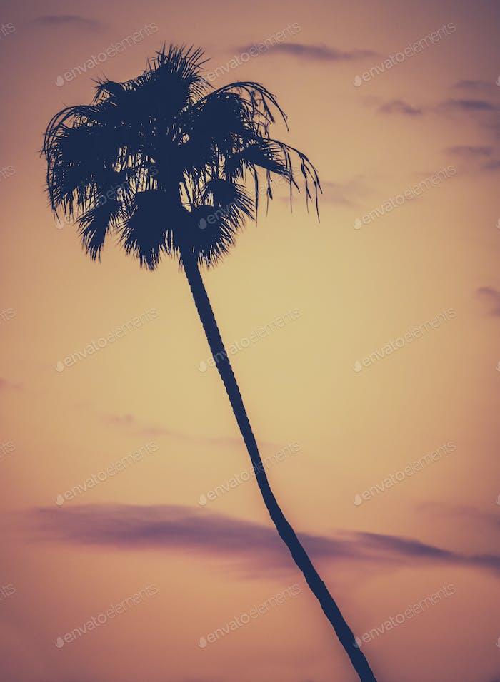 Golden Sunset Palm Tree