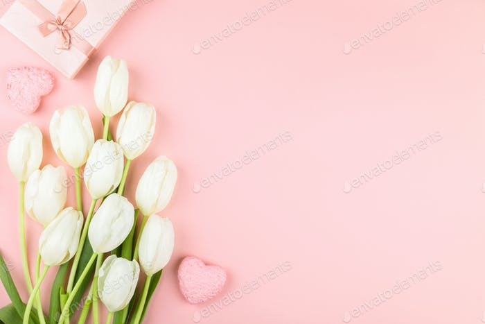 White tulip on pastel pink background. Traditional holiday gift.