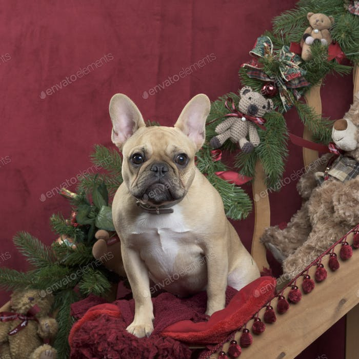 French Bulldog in Christmas decoration