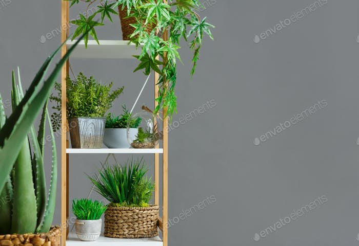 Wooden bookshelf with various plants over wall